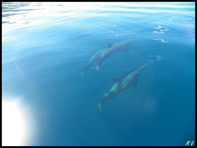 Jeux de dauphins