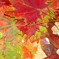 2010-10-11_193029