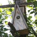 2009 06 02 Le mésange bleu qui donne a manger a ses petits dans le nichoir (2)