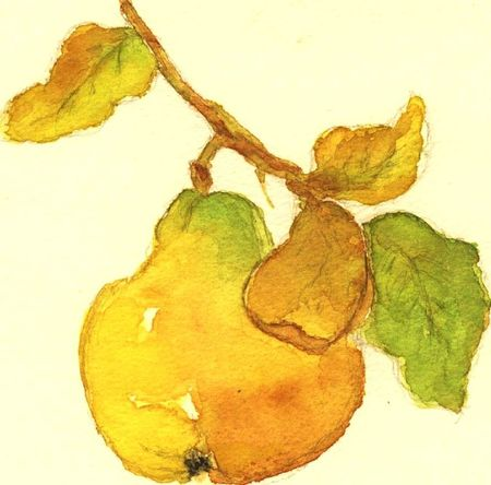 Yvonne M Une poire jaune