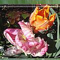 balanicole_2017_05_le printemps des tulipes_14_parrot rose blanc et golden artist1