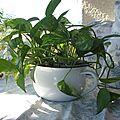 dét obj plantes (6)