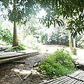 treck bambou DSCN2257
