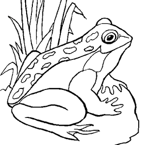 coloriage_grenouille