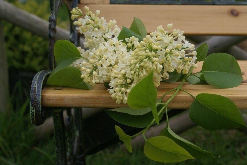 jardin avril 022