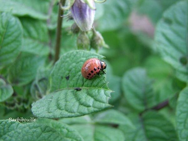 larve05 Juil16