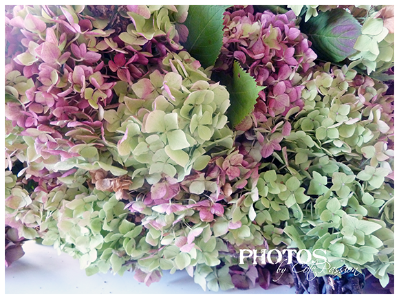 Cote Passion Hortensias