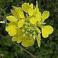 jaune (1)