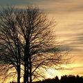 2009 01 12 Un arbre lors du coucher de soleil