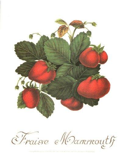 les fraises (11)