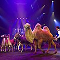 Magnifique cirque arlette gruss !
