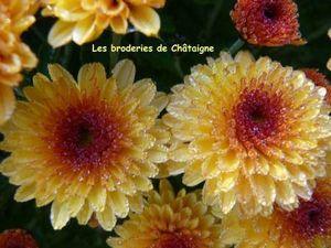 Chrysanthèmes (5)