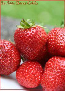 fraises_dare_dare_3