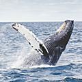 Le retour des baleines a new york