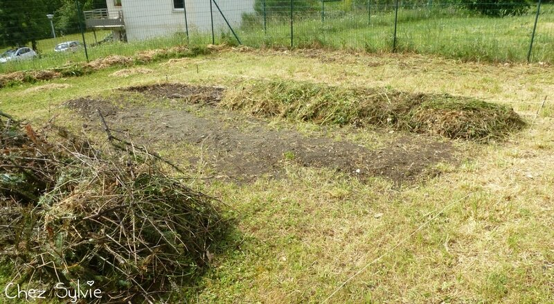 Potager permaculture 12