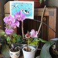 Orchidée : pour lionel