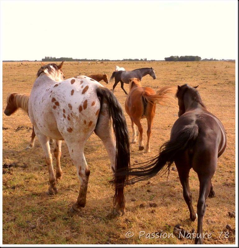 Les chevaux en pension (26)