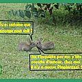 Un p'tit flirt entre lapins