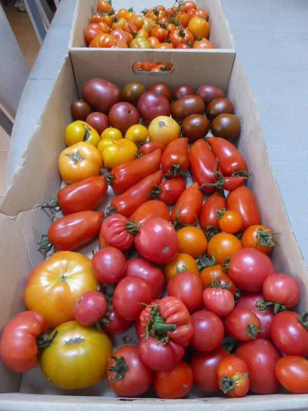 16-tomates (3)
