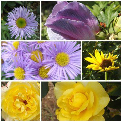 Conserves & jardin (16)