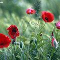 La plus simple et la plus belle des fleurs