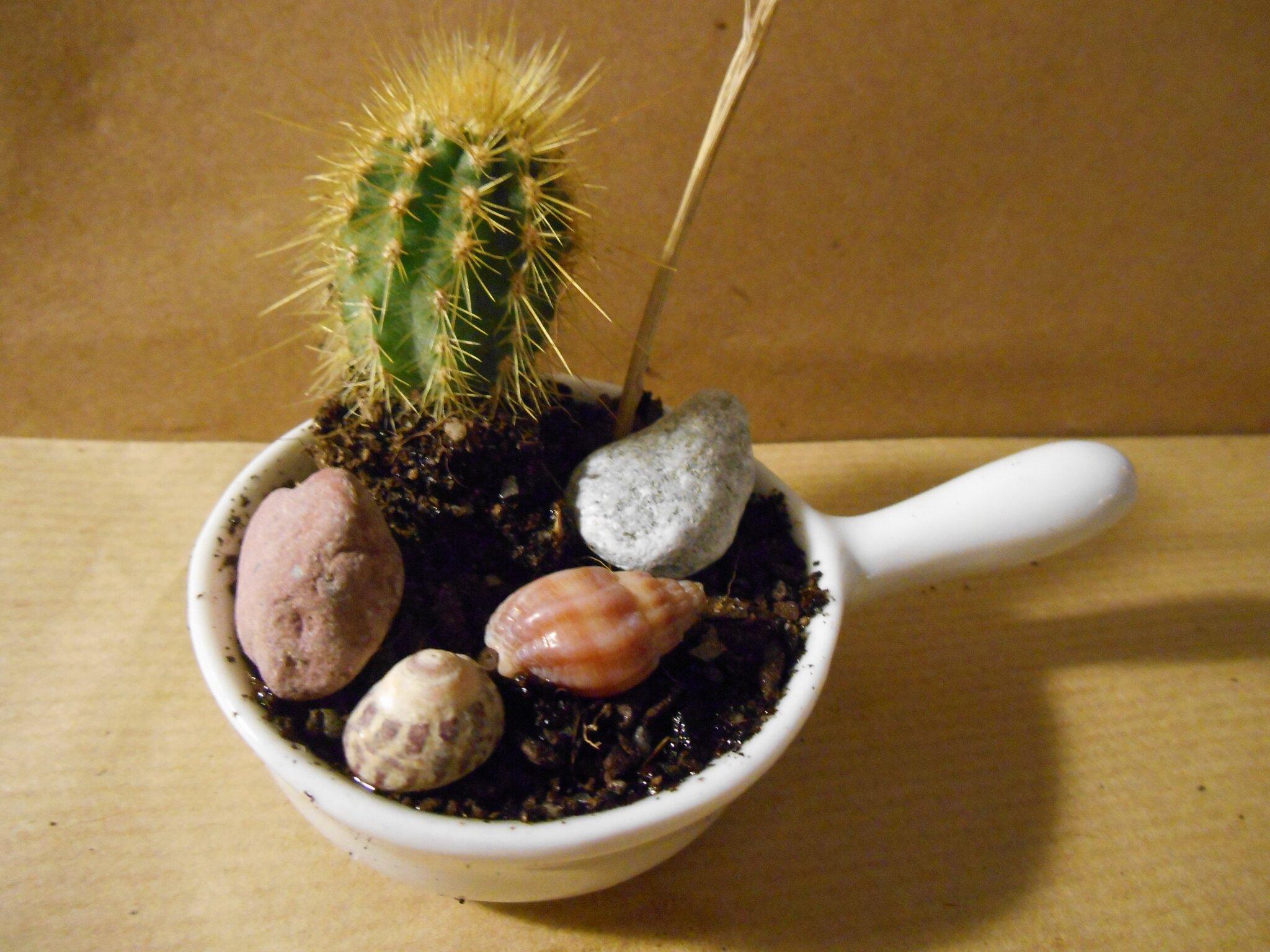 Projet DIY-1: Mini jardin dans un mini pot