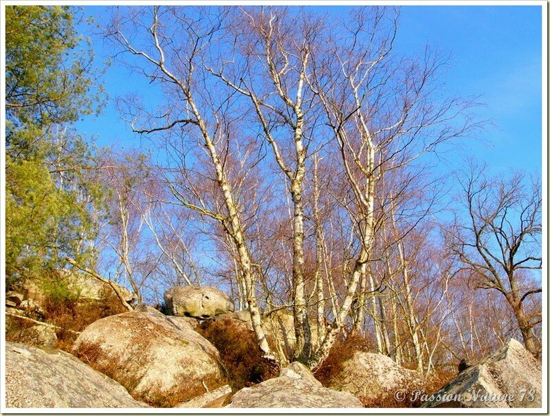 La forêt de Rambouillet vue sous un autre angle (15)