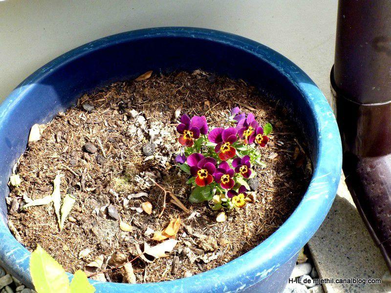 29-Jardi du 6 avril 2012 035