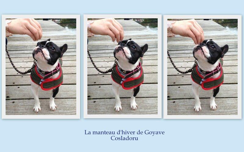 le manteau d'hiver de Goyave4