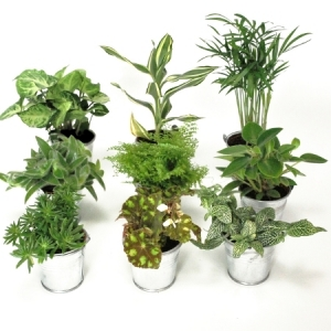 La nature en cadeaux le salon de th le blog d 39 un for Ikea plantes vertes artificielles