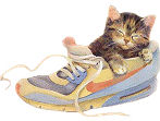 chat_dans_basket