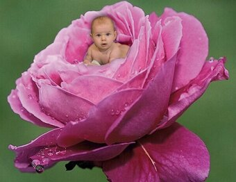 rose-fille