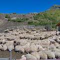 Un troupeau de moutons...