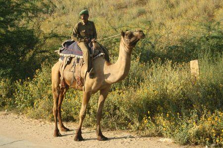 IMG_9248-policier sur chameau