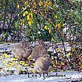 Crémeux de chou-fleur & carottes pour la naissance des bébés lapins