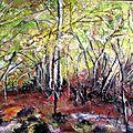Forêt brùlée