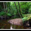 Un petit ruisseau en forêt d'écouves