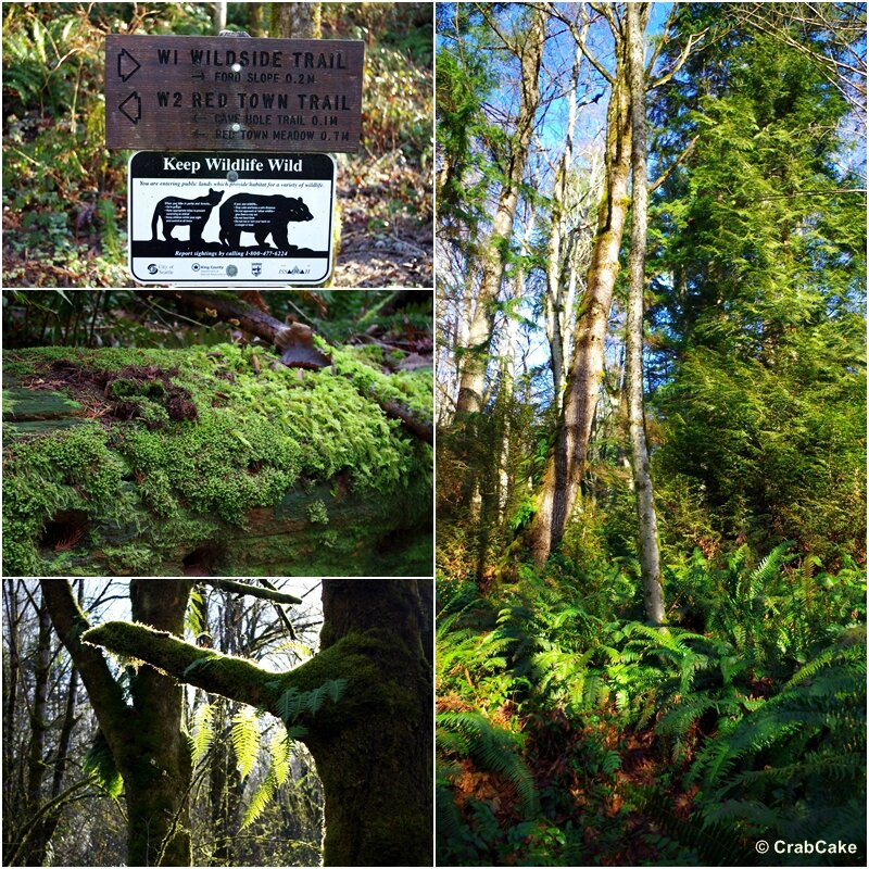 Cougar Mountain Trail
