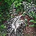 Jardin Poterie Hillen 12061661