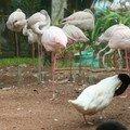 Dans le parc naturel d'Iguaçu