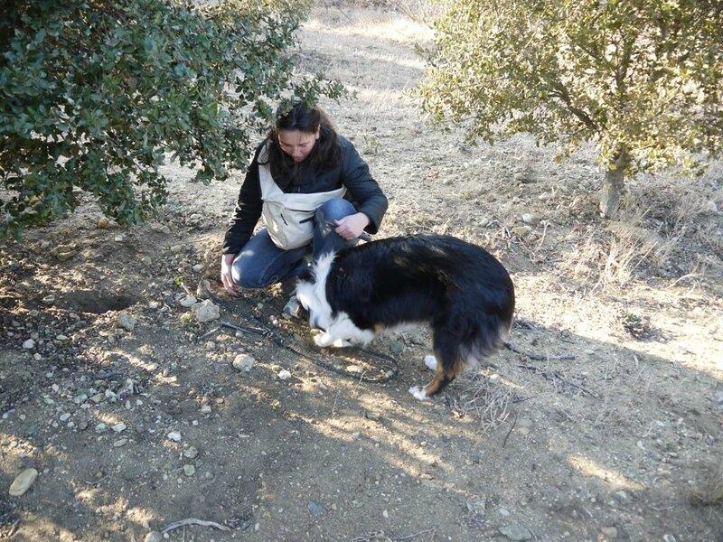 Cavage-chien