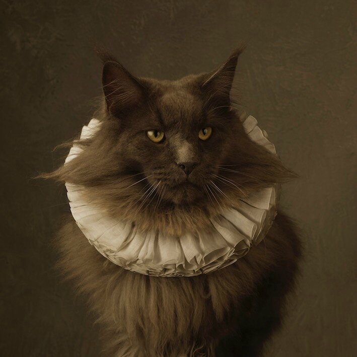 marie-cecile-thijs---cat_709