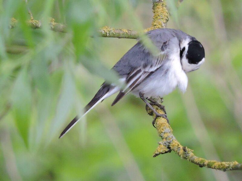 blog oiseau elo 149