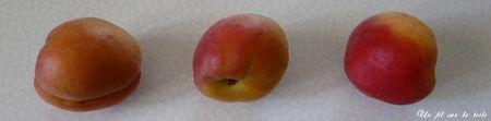 abricots_2