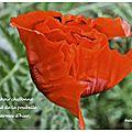 Mouchoir chiffonné (crumpled handkerchief)