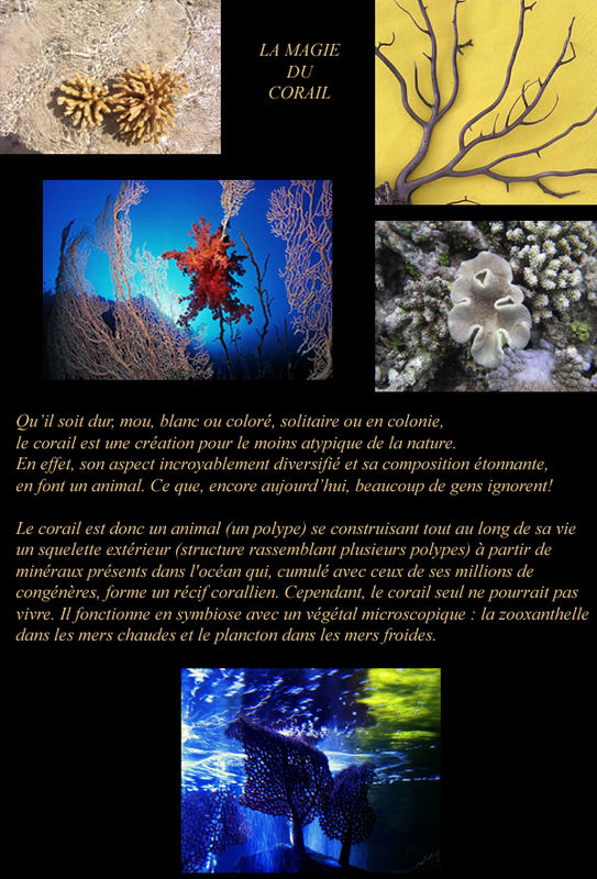 Article_La_Magie_du_Corail
