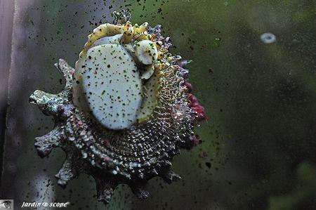 Mollusque eau de mer