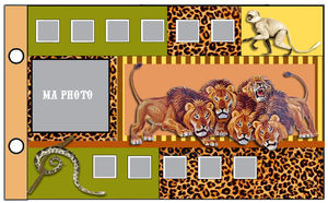 02_photos__invites__safari