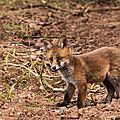 2014-05-30 LUX-0993