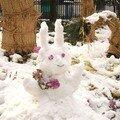 Lapin de neige